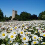 Chalk Church & daisies