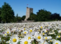 Chalk Church and Daisies by John Allison