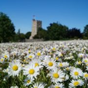 Chalk Church & Daisies